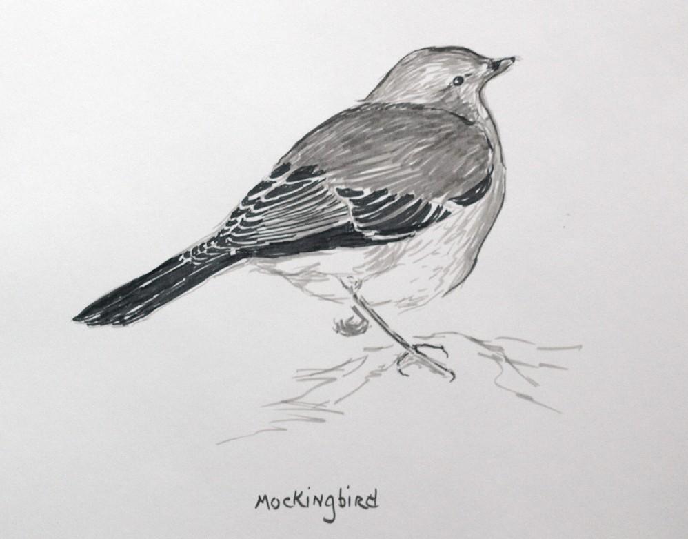 a mockinbird essay