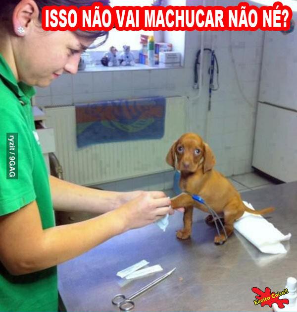 veterinario, cachorrinho, o do, eeeita coisa