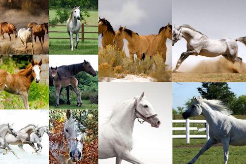 Fondos de caballos para iPad y iPad2 (1024x1024)