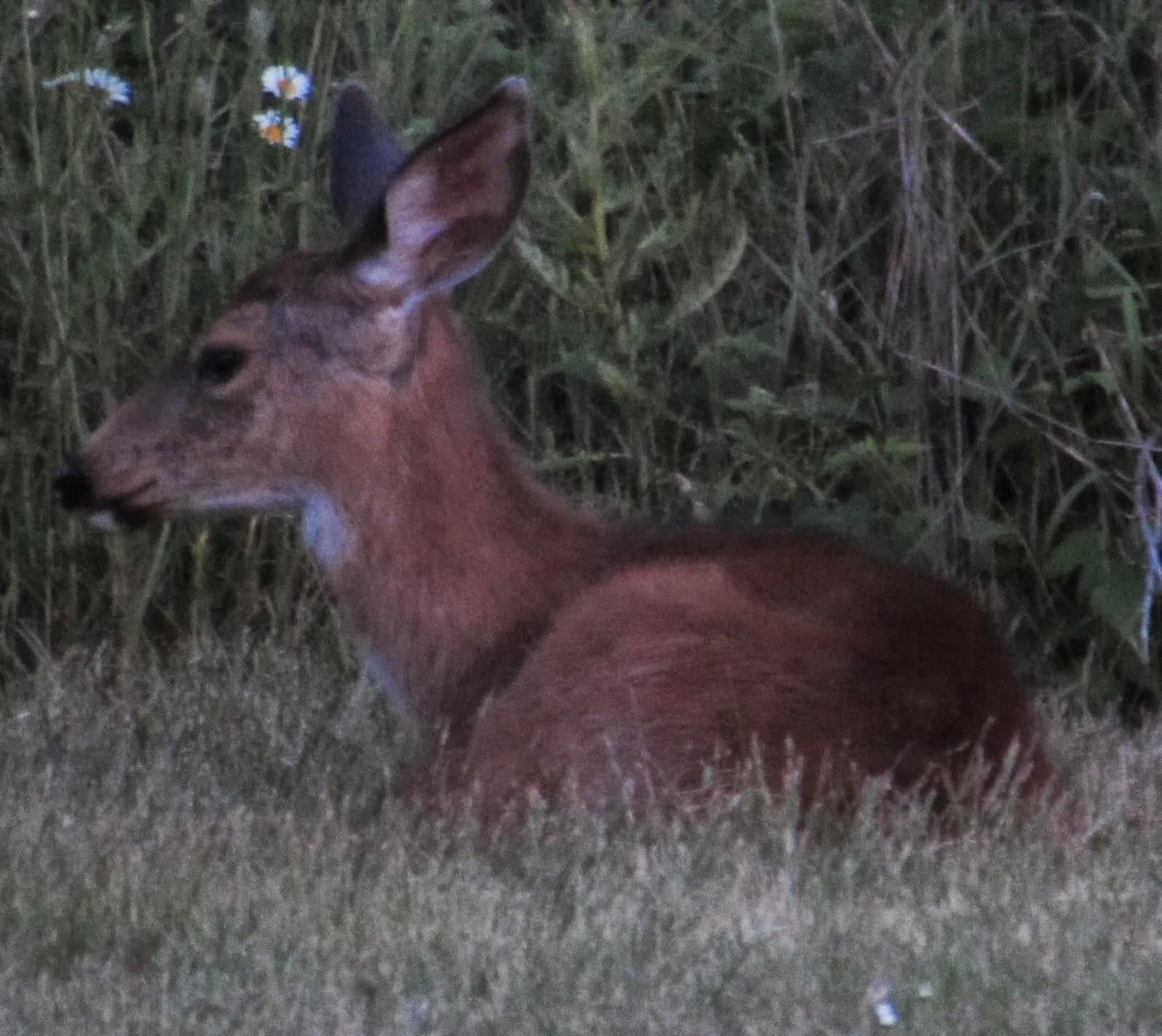 garden grumbles and cross stitch fumbles a warren of rabbits