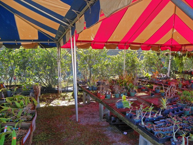 The  Bargain Tents  where I picked up some plants for my dish gardens for as little as $1 & Bay-Friendly Landscaping: A Heckuva Plant Party
