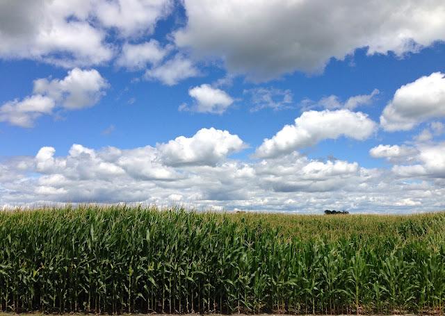 Corn_field_sky_sun_clouds