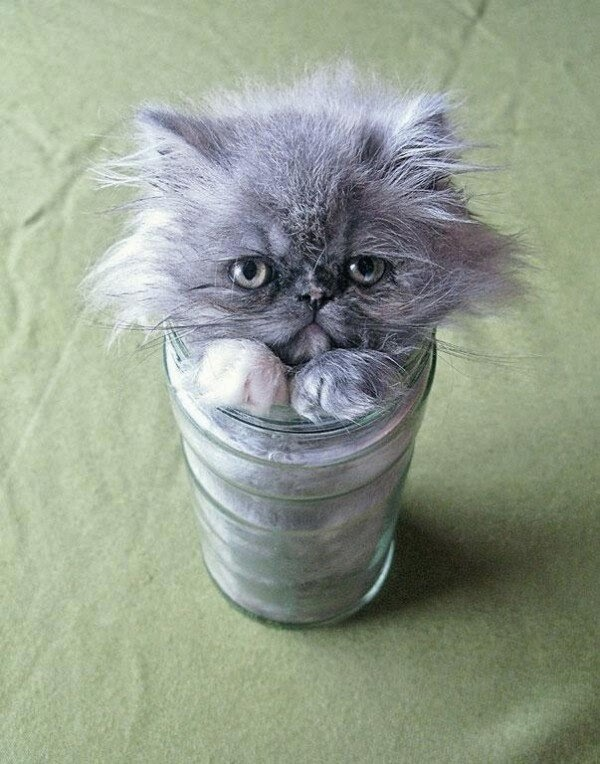 Funny cats - part 95 (40 pics + 10 gifs), cat pictures, cat fits in a glass