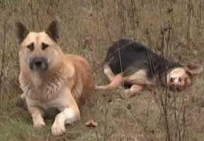 BROKEN-HEARTED DOG STANDS GUARD OVER DEAD MATE'S BODY FOR OVER A WEEK