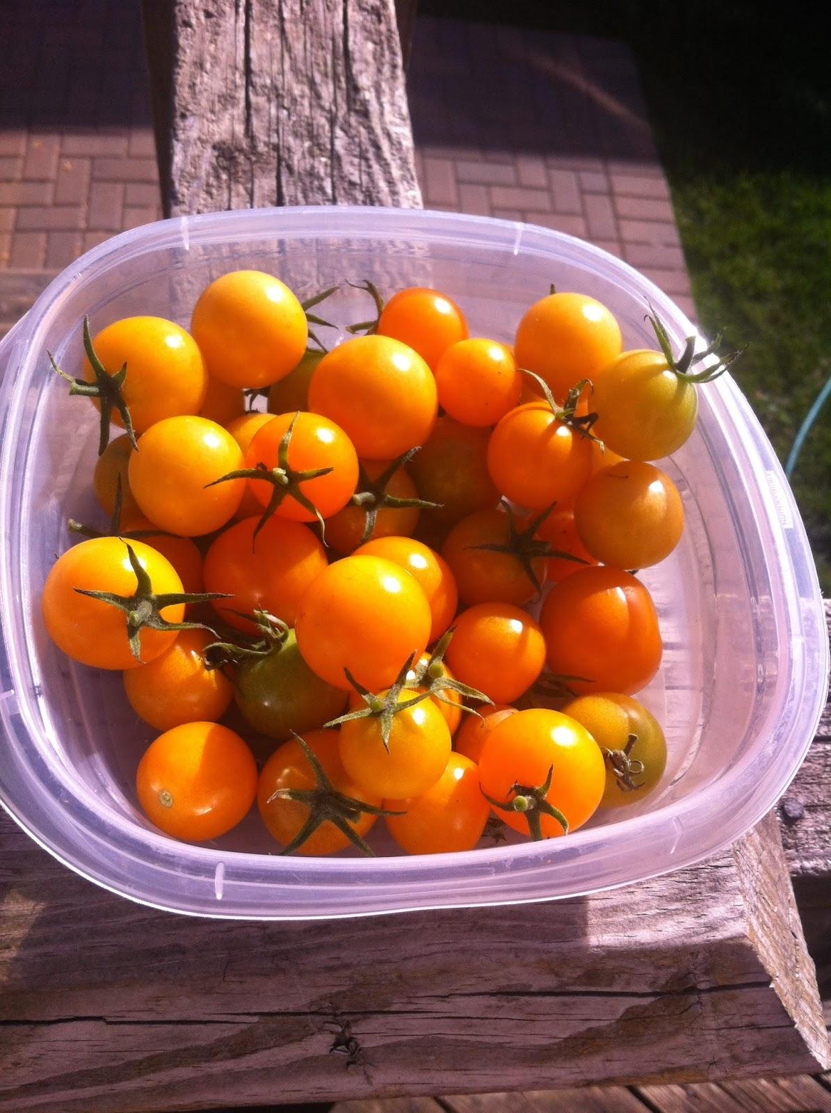 Garden-Tomatoes