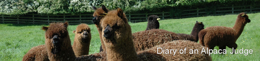 Diary of an Alpaca Judge