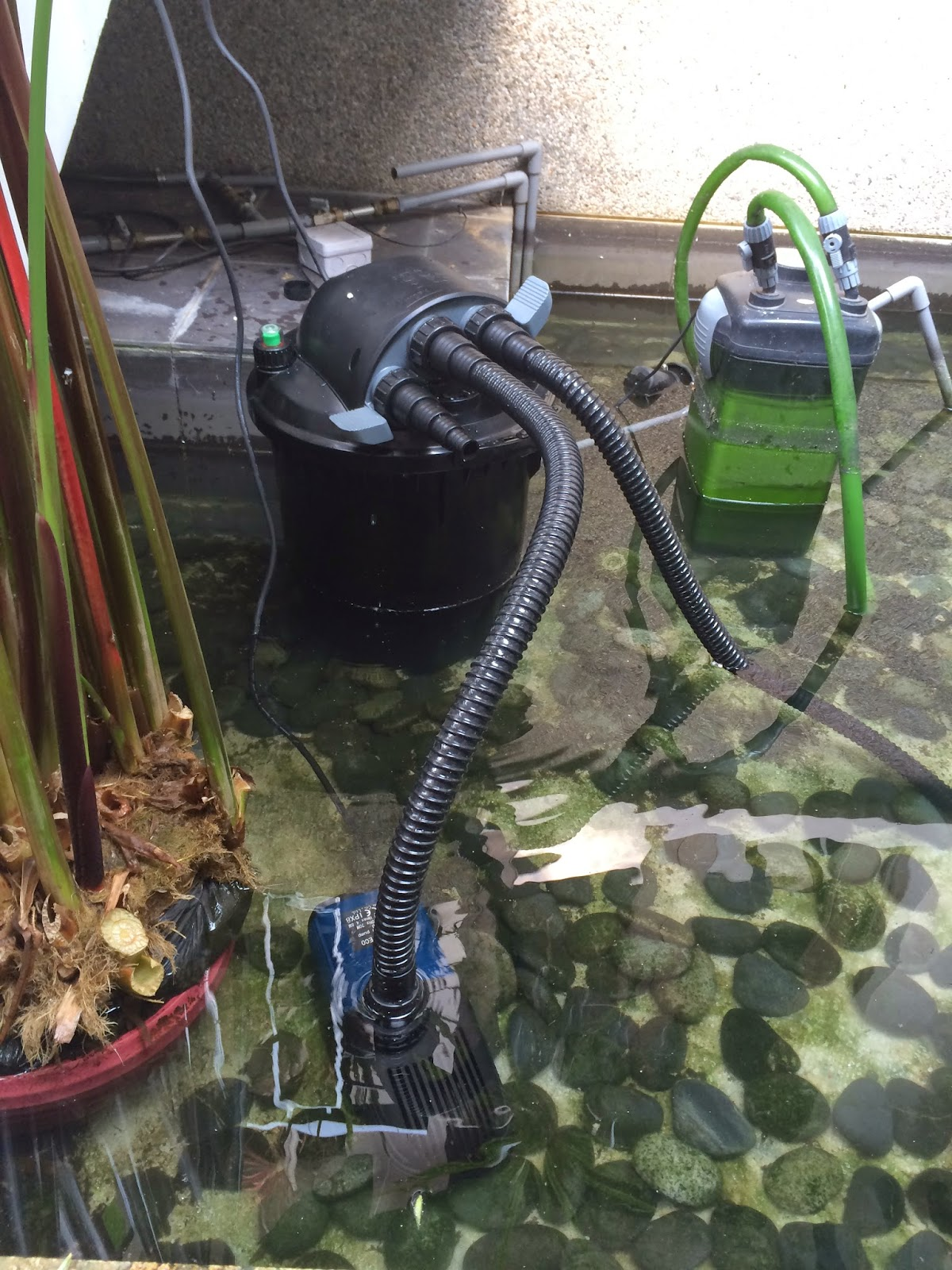 East ocean aquatic trading centre solving a customer pond for Used pond filters and pumps