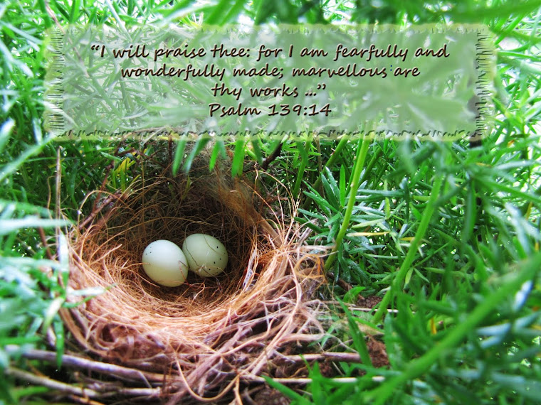 Bird's Nest - Psalm 139:14