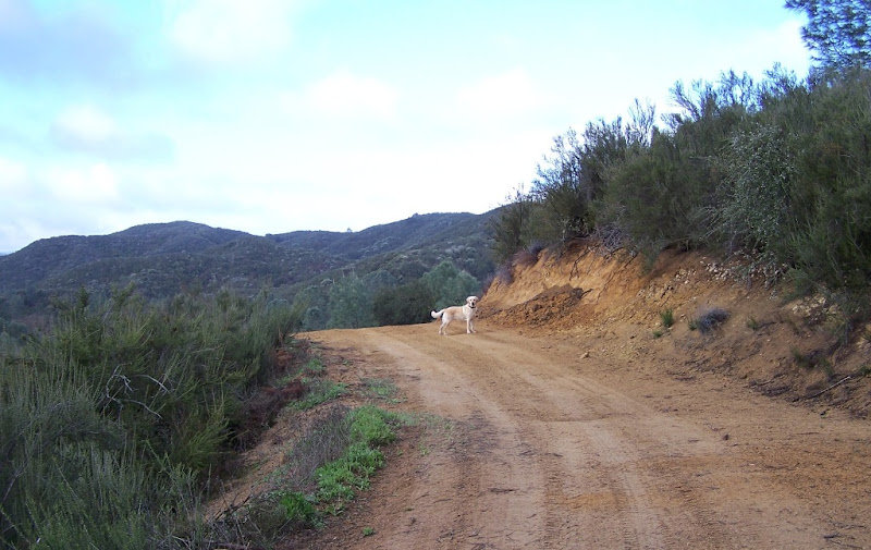 cabana standing in the distance on an orange-ish dirt trail with brush growing on either side, in the distance are miles and miles of open country with tree-covered hills and blue sky above