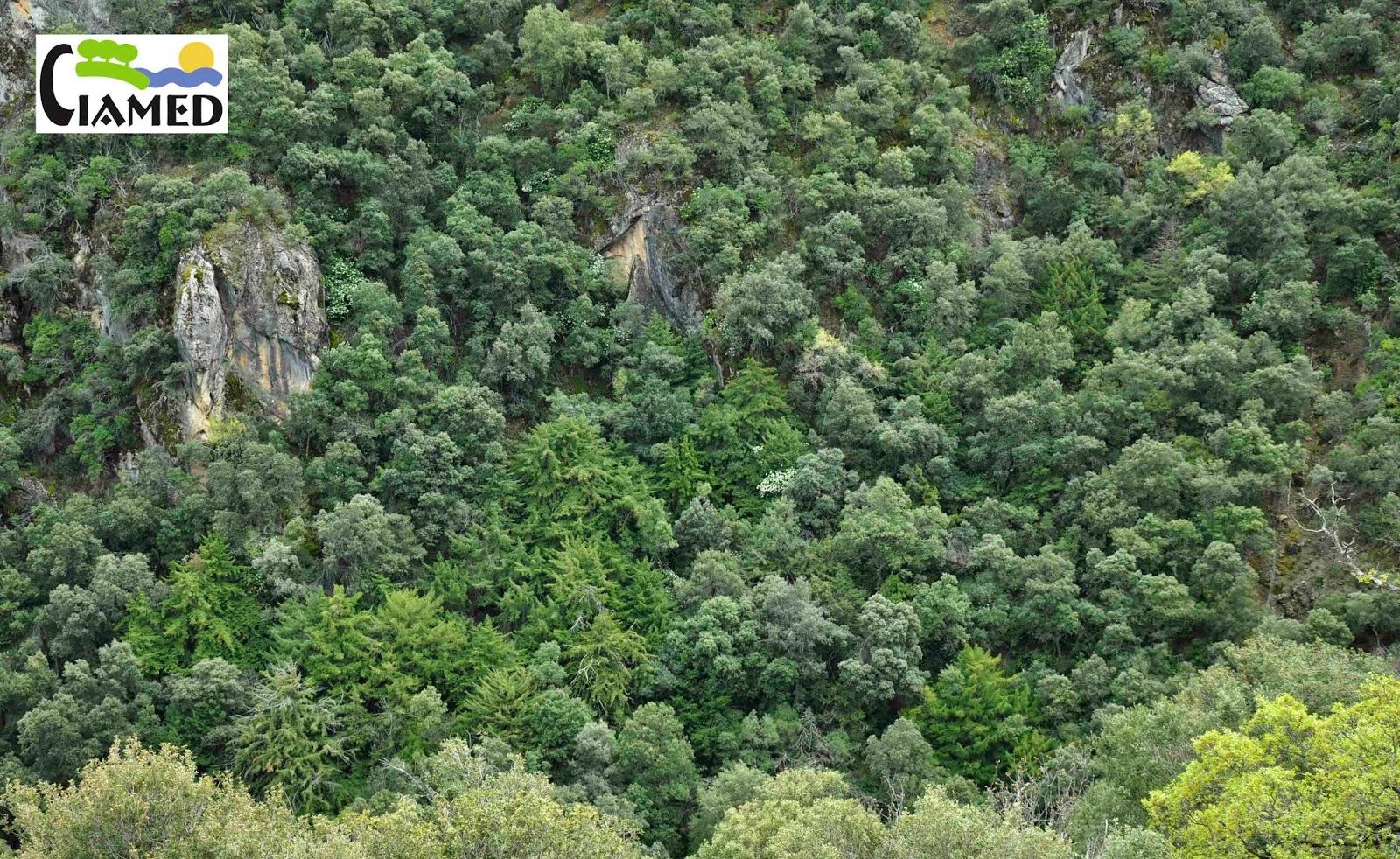 Biodiversidad en los paises mediterraneos arboles y - Especies de arbustos ...