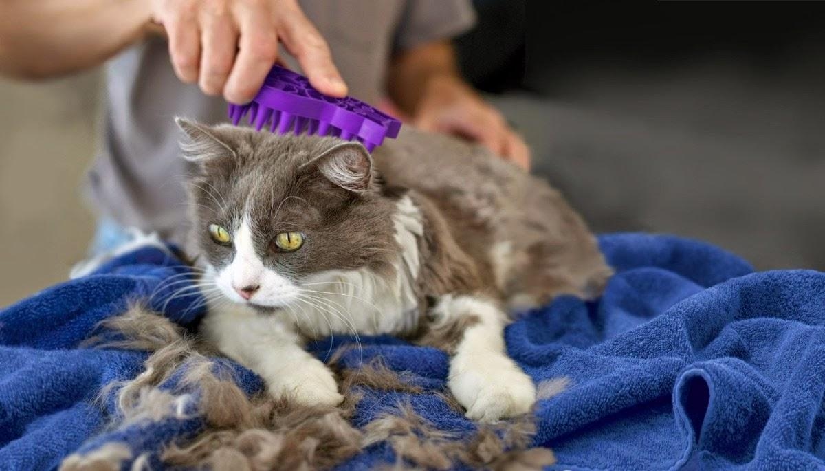 El aceite para los cabellos que han arraigado
