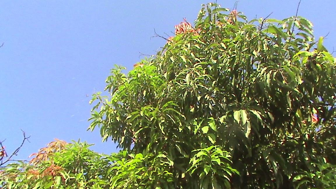 Ara as insectos y bichos del jard n enorme ara a y telara a for Insectos del jardin