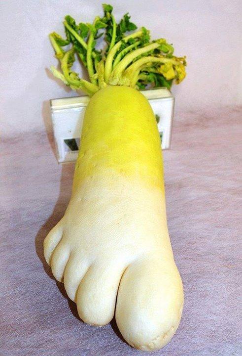 Lobak dengan bentuk kaki