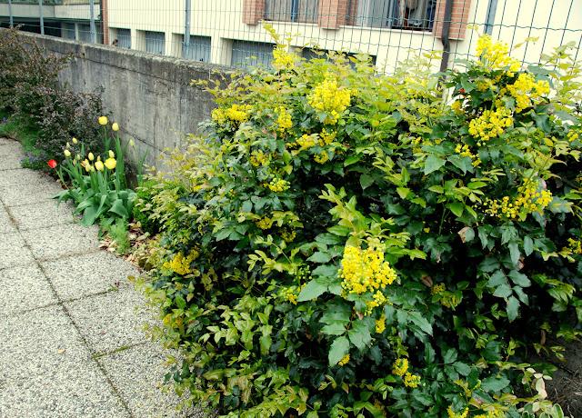 il mondo in un giardino: marzo 2013 - Un Piccolo Giardino Fragrante