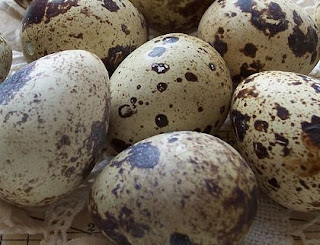 telur puyuh sehat