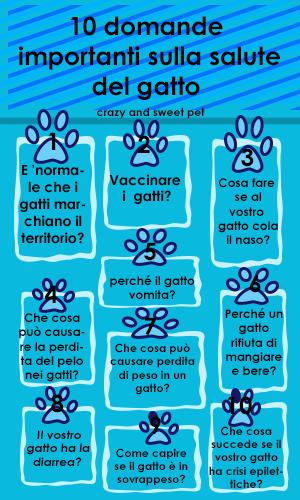 infografica 10 domande per i gatti