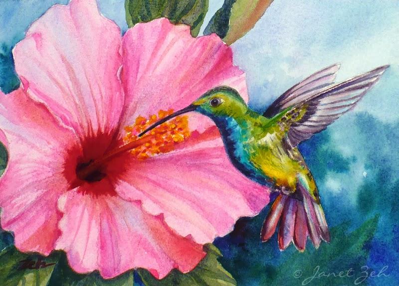A hummingbird visits a pink hibiscus flower