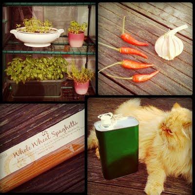 pärsia kass