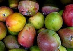 Foto de Mangos africano