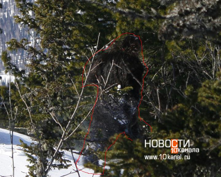bigfoot captured in russia