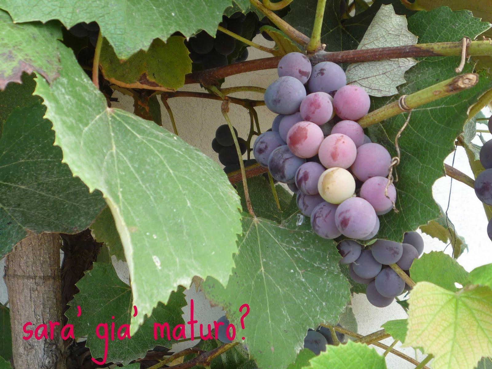 Una stella tra i fornelli crostata con marmellata di uva for Sognare uva fragola
