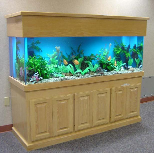 Marine aquariums aquarium design with wood stand for Wooden fish tank