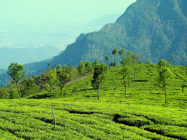 Ooty mountains wallpapers and pictures free download