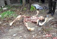 Cặp vợ chồng sát thủ ăn thịt người ( Ukraina ) | hay88.com