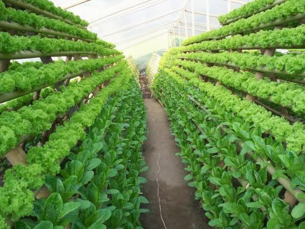Ple m ster profesorado umh cultivos sin suelo for Imagenes de hidroponia