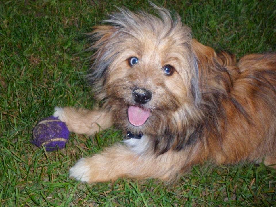 3 Top Cute Shih tzu Puppies