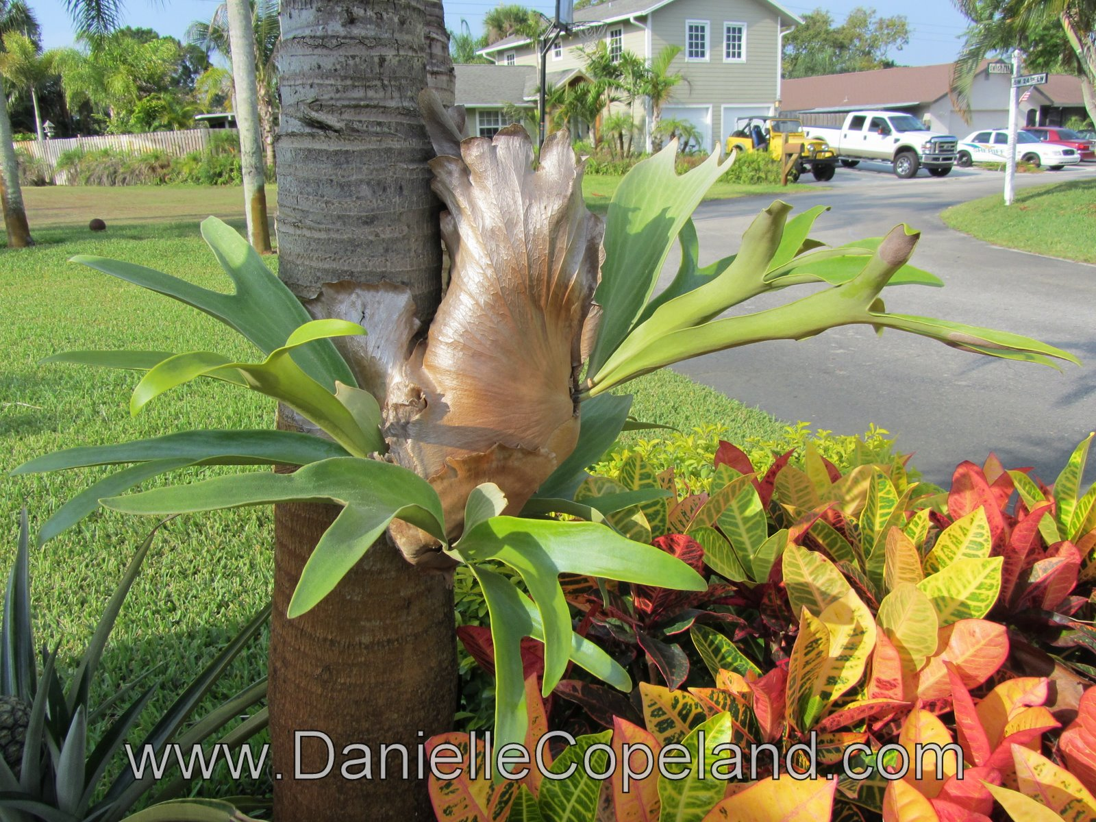 how to make a pineapple palm tree