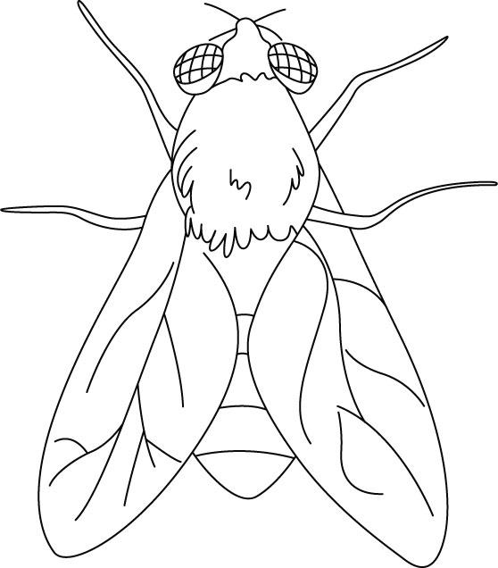 Menta m s chocolate recursos y actividades para educaci n infantil im genes a color de moscas - Fotos de insectos para imprimir ...
