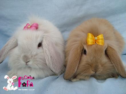 Seu comportamento e suas necessidades não são diferentes dos coelhos ...