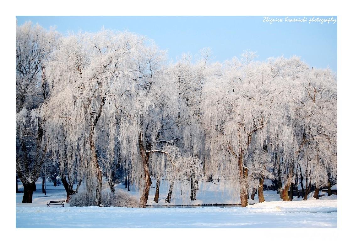 Zima nad Łyną