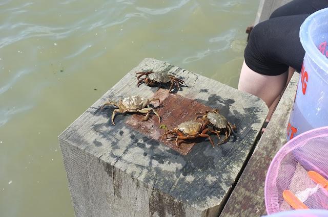 crabbing orford