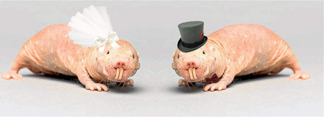 ハダカデバネズミの画像 p1_30