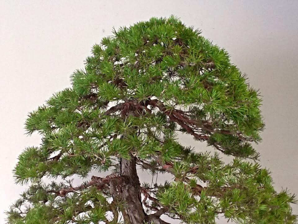 Sell my pine trees