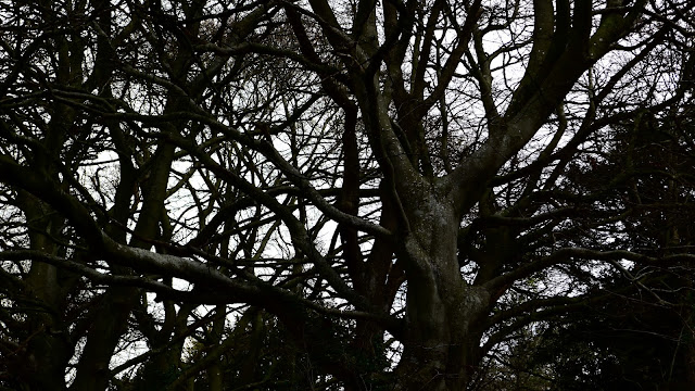 Dark and Gothic, just how I like my trees