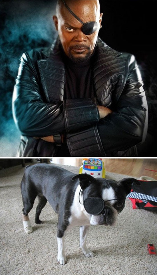If the movie The Avengers were made with animals, the avengers, funny pictures, funny, animals, movies