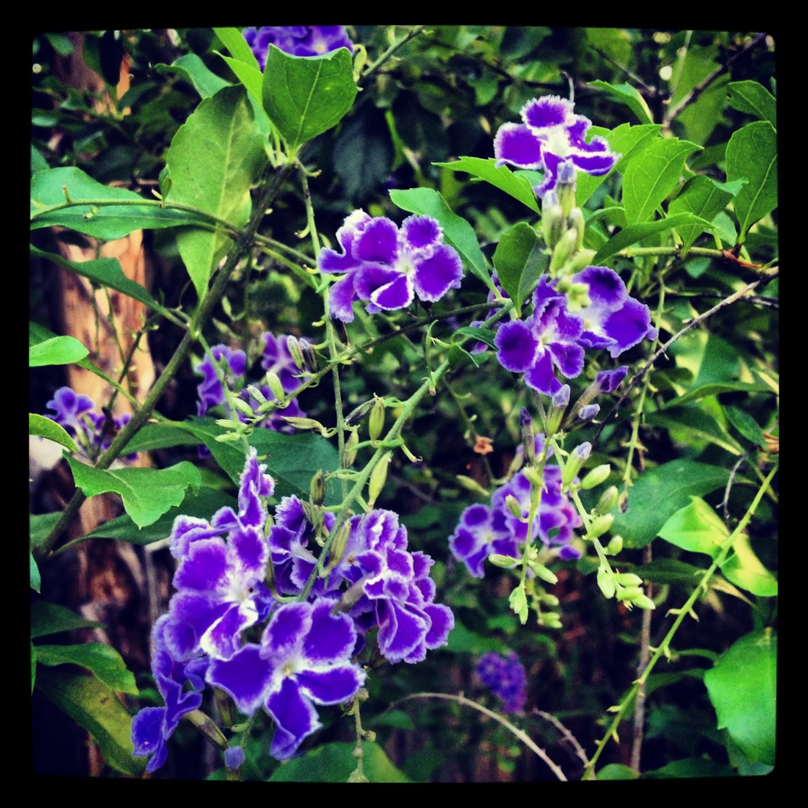 Light Up The Dark Tiny Blue Flowers