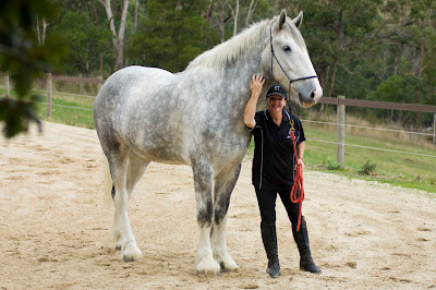 Luscombe_Nodram_Noddy_The_worlds_Tallest_horse_Australia_Jane_Greenman