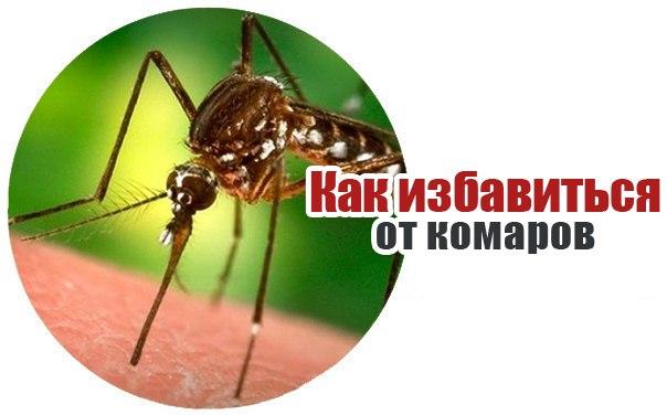 Как избавятся от комаров в домашних условиях 553