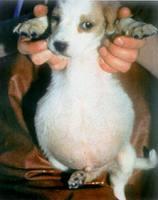 Dog Dewormer For Humans