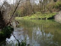 El riu Llobregat a prop de l'aiguabarreig amb la Riera de Merlès