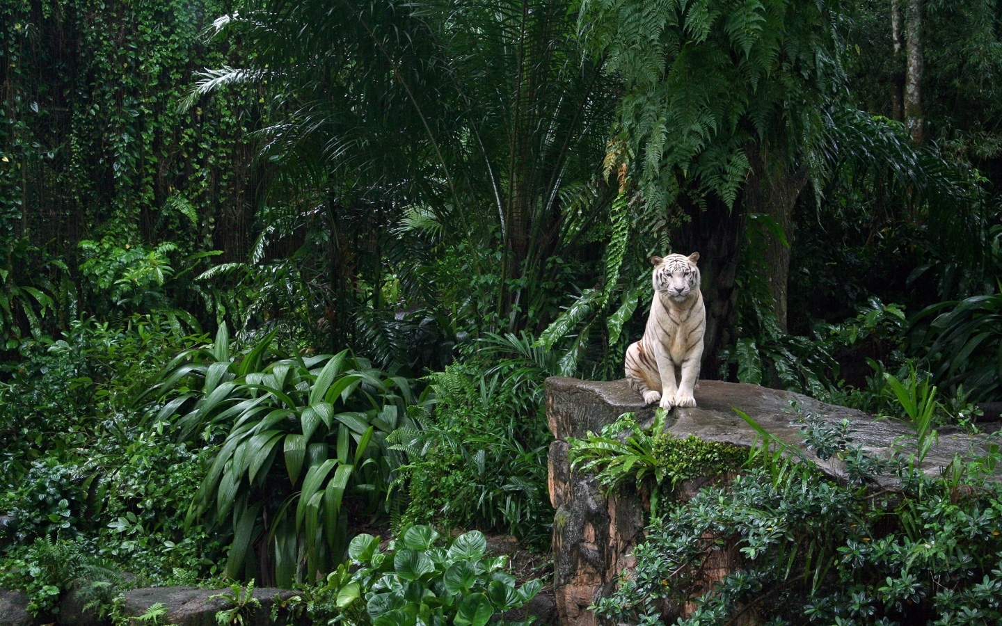 http://2.bp.blogspot.com/-0bBjVPcv6RI/TlsKIpO5U1I/AAAAAAAAAAk/iGgaFlNSCEg/s1600/White-Tiger-In-Jungle_1440x900_1363.jpg