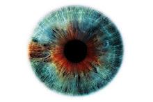 O olhar além da contemplação - Daniela Karg