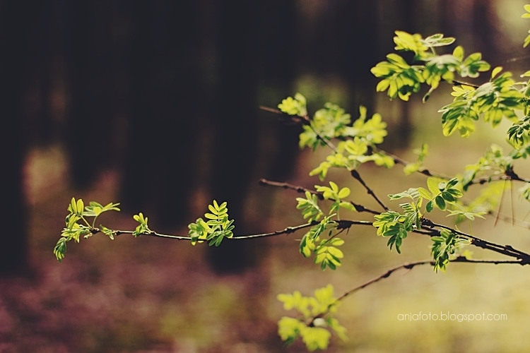 las, forest, bokeh, bokeh photography, fotografia przyrodnicza, nature photography