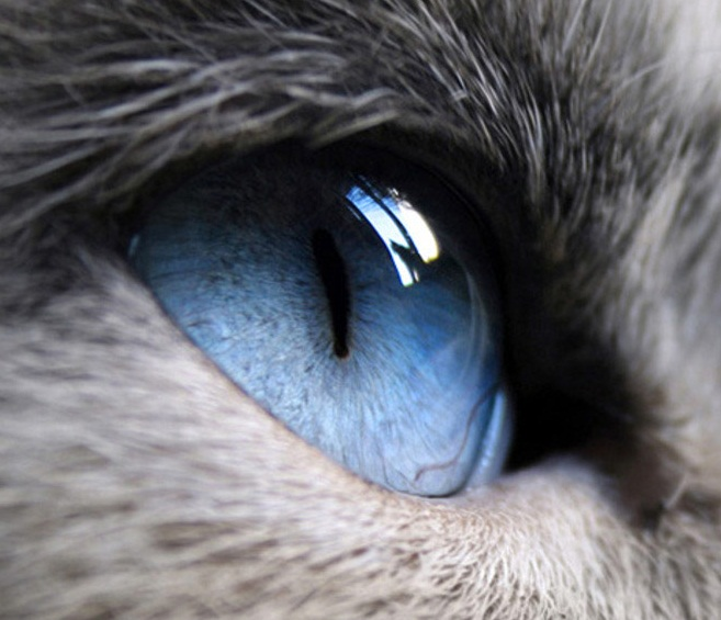 The Eye of a Cat: Are Cats Colorblind?