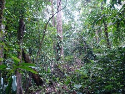Imagenes de animales del bosque RUMANGSAMU