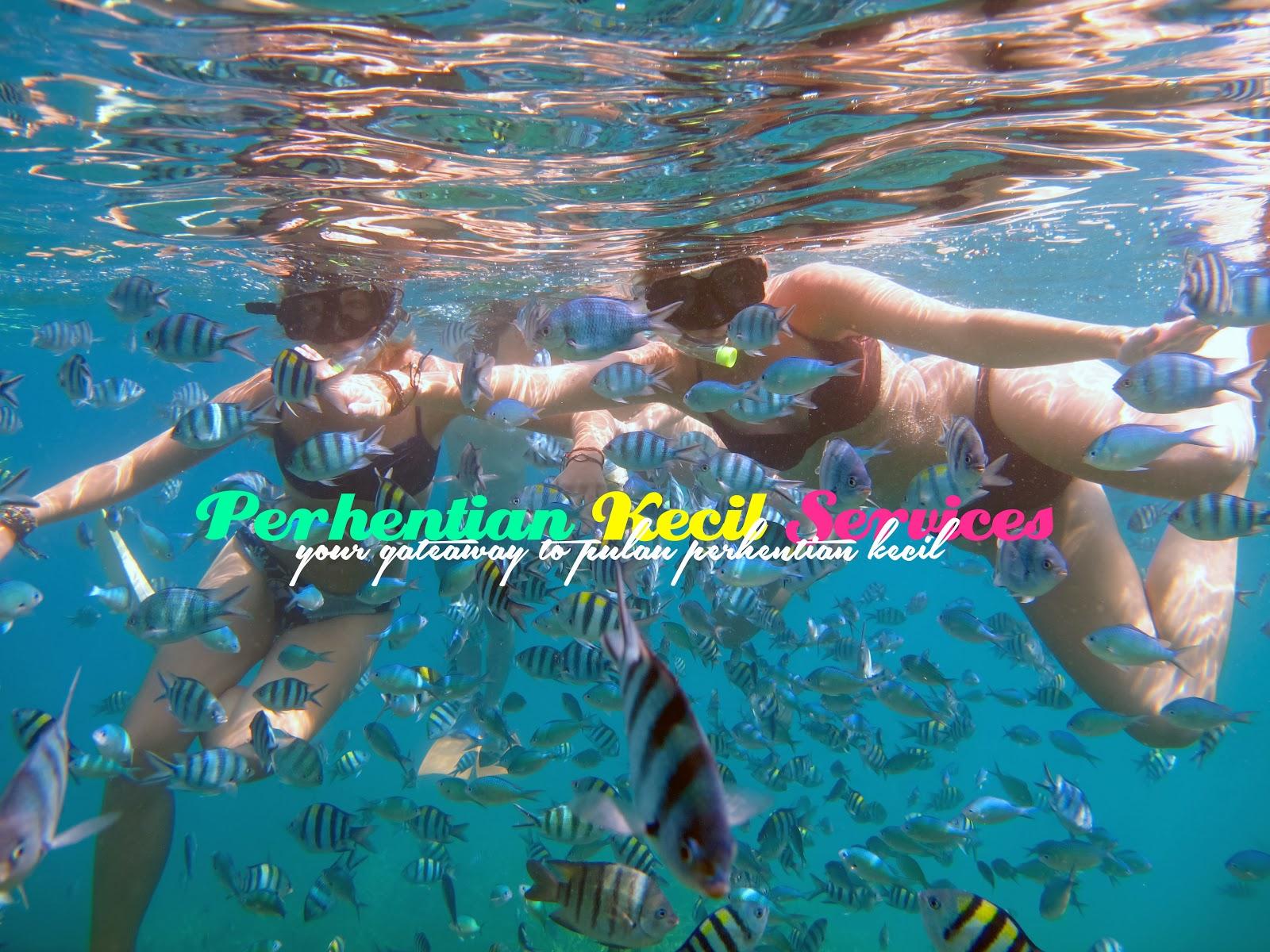 pakej snorkeling pulau perhentian, pakej murah percutian perhentian, pakej percutian berkumpulan perhentian, pakej snorkeling murah perhentian, snorkeling terbaik pulau perhentian, perhentian kecil services